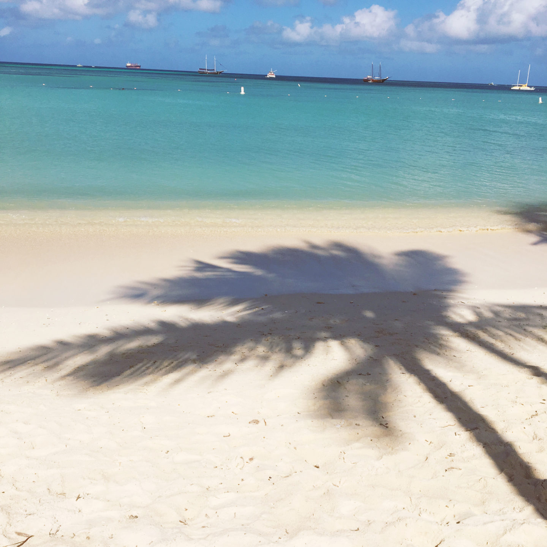 PAlm tree-Aruba-palm beach-travel blog